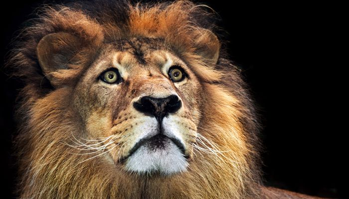 Are you an alpha male leader?